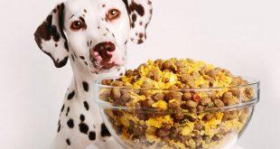 تولید خانگی غذای سگ